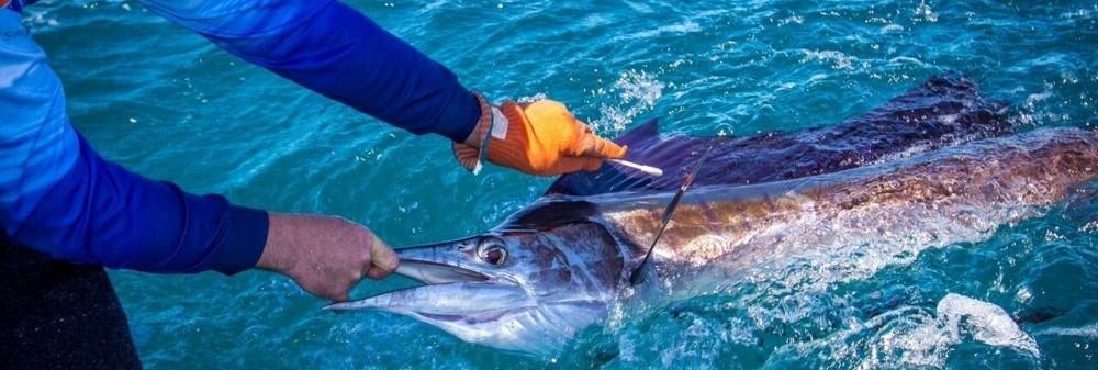sail fish swab broome