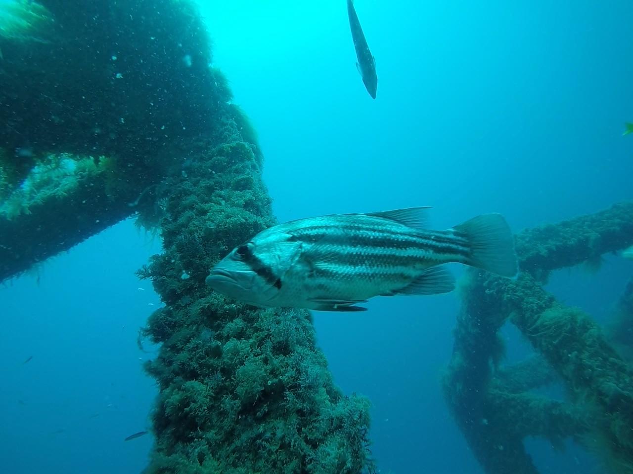 art reef dhuie