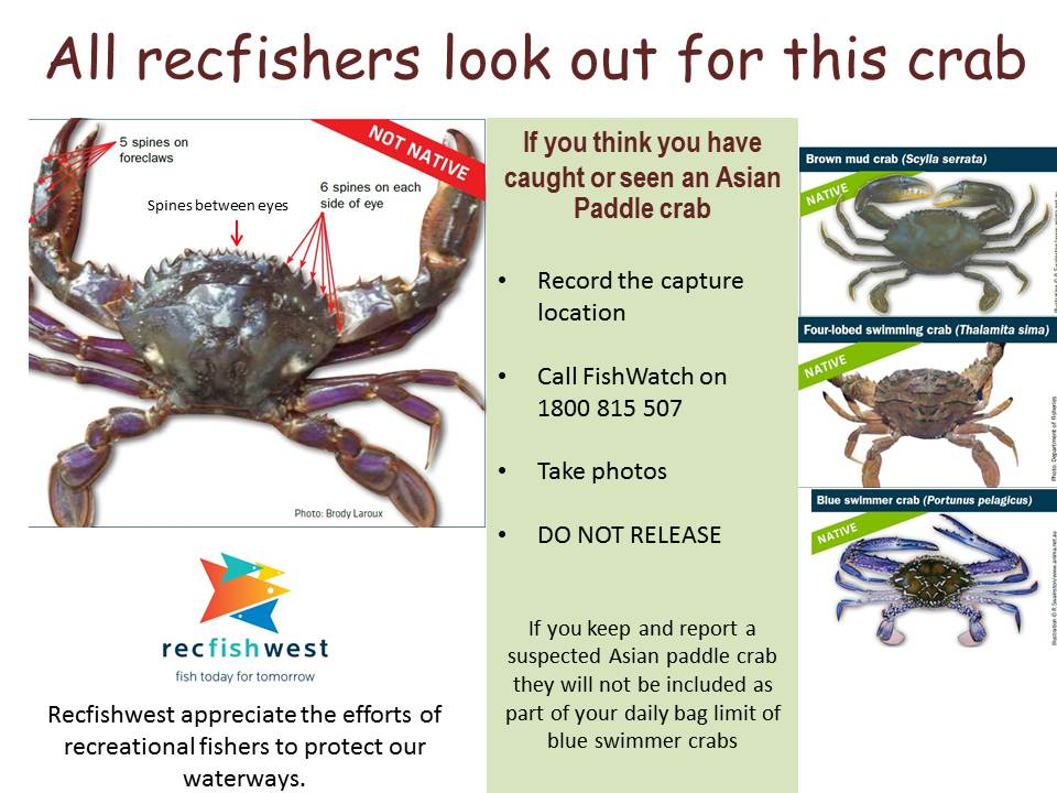 Asian Paddle Crab alert