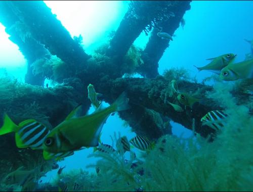 southwest reefs