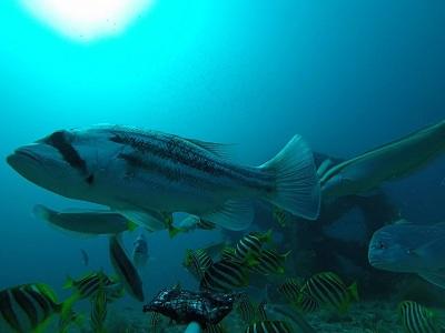 dhuy art reef