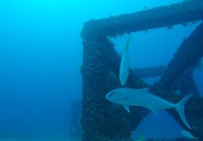 sambo reef