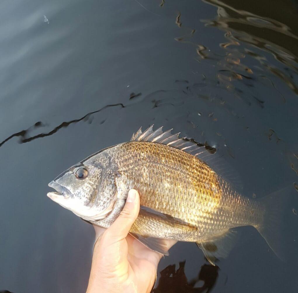 Recreational Fishing Initiatives Fund - Recfishwest