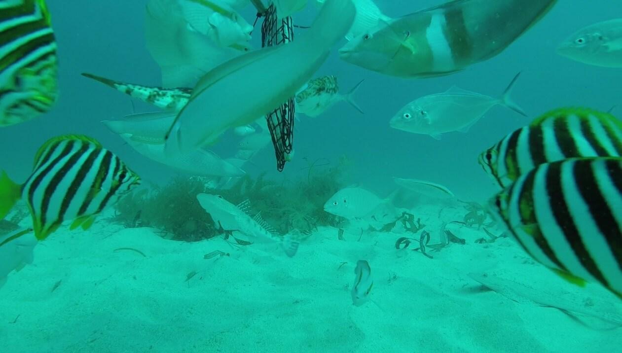 reef Archives - Recfishwest